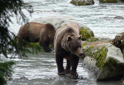 Bear04